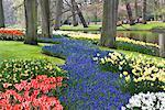 Tulips, Daffodils and Blue Bells, Keukenhof Gardens, Netherlands
