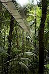 Bridge Through Rainforest, La Fortuna, Alajuela Province, Costa Rica