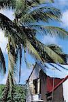 Maurice, Rodrigues, Port-Mathurin, local maison en carton ondulé