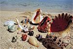Maurice, coquilles à vendre sur la plage