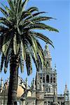Espagne, Andalousie, Séville, la Giralda, le clocher de la cathédrale