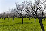 Orchard, Mallorca, Spain