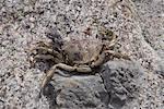 Close-up of Crab