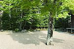 Japanese maples in rock garden