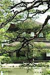 Japanese pagoda viewed through pine branches