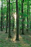 Forêt au printemps, Mecklembourg-Poméranie occidentale, Allemagne