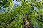Faible vue d'angle des arbres dans la forêt
