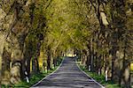 Bordée d'arbres Country Road, Rügen, Mecklembourg-Poméranie occidentale, Allemagne