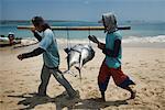 Tuna Fishermen on Beach, Bali, Indonesia