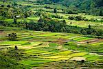 Overview of Rice Terraces, Alahan Panjang, Sumatra, Indonesia