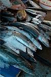 Fish at Market, Duong Dong Market, Vietnam