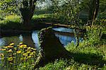 Riverbank at Sunrise, Villeneuve a l'Archeveque, Burgundy, France