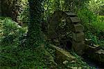 Watermill in Forest, Villeneuve, a l'Archeveque, Burgundy, France