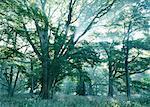 Lumière du soleil en Streaming à travers les feuilles des arbres