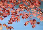 Couleur des feuilles d'automne