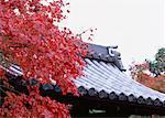 Feuilles teintées de rouges et sur le toit de style traditionnel japonais