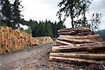 Piles de bois de sciage, le Parc National du Harz, Saxe-Anhalt, Allemagne