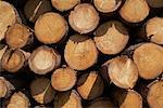 Pile de bois de sciage, le Parc National du Harz, Saxe-Anhalt, Allemagne
