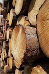 Stack of Lumber, Harz National Park, Saxony-Anhalt, Germany