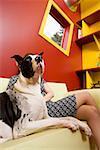 Frau sitzt auf der Couch mit Dogge