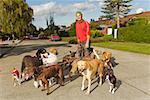 Man walking multiple dogs