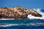 Lions de mer près de Carmel, Californie, USA
