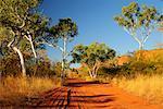 Road in Purnululu National Park, Kimberley, Western Australia, Australia