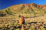 Termite Mound and Osmand Range, Kimberley, Western Australia, Australia