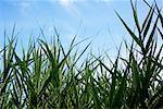 Close-up of Grass, Royal Botanical Gardens, Ontario, Canada