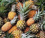 Ananas mûrs et immatures (full-frame)
