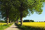 Route de campagne bordée d'arbres en Plon, Schleswig-Holstein, Allemagne