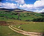 Sperrin Mountains, Co Tyrone, Ireland