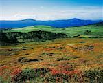Sheep's Head, Kilcrohane, Co Cork Ireland