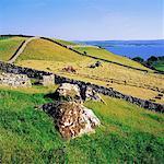 Traditional Farming, Hay Making, Shore Of Lough Corrib Galway