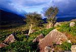 Molls Gap, Parc National de Killarney, comté de Kerry, Irlande ; Scenic Rocky