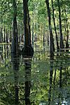 Lake Martin, Lafayette, Louisiana, USA