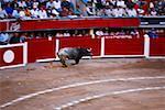 Bull s'exécutant dans une arène, Plaza De Toros San Marcos, Aguascalientes, Mexique