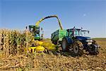 Ernte von Mais auf Bauernhof