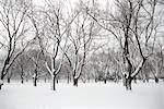 Neige couvertes d'arbres dans le parc, Toronto, Ontario, Canada