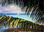 Polynésie française, archipel des Tuamotu, Rangiroa, vue sur la lagune