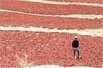 China, Xinjiang, dried peppers