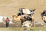 China, Xinjiang, Altay Massif, Kazak nomad