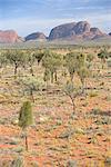Australie, Northern Territory, Uluru-kata Tjuta national park, les Olgas