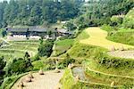 Guizhou, la Chine, près de Kaili, village de Nanhua