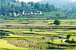 Chine, Guizhou, près du village de Olanxi, rizière