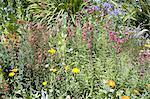 Portugal, Madeira, Funchal, Palheiro estate, des jardins botaniques de Blandy, fleurs