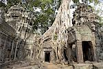 Cambodia, Angkor, Ta Prohm