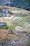Vietnam, Sappa, ricefields.