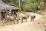 Vietnam, village de Bac Ha, paysan de Hmong.