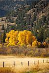 Fall Scene near Princeton, British Columbia, Canada